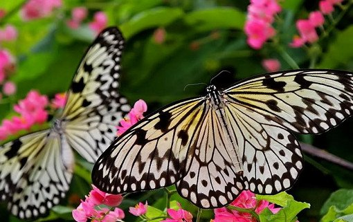 Singapore Butterfly Park and Insect Kingdom Ticket_4