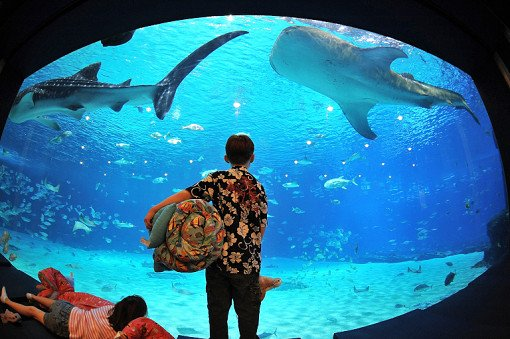 Taiwan NMMBA Aquarium Sleepover_2