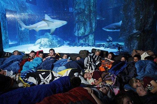 Taiwan NMMBA Aquarium Sleepover_3