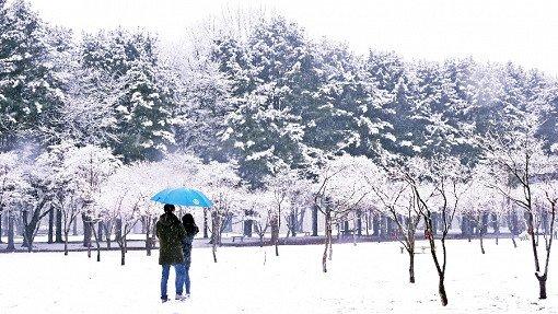 [Dec 5-Mar 24] Nami Island& Garden of Morning Calm Lighting Festival One Day Tour_1