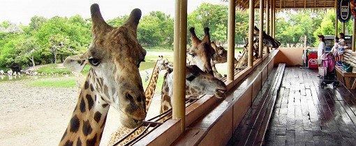 Safari World Bangkok Discount Ticket_2