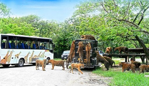 Safari World Bangkok Discount Ticket_1