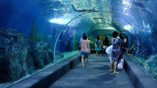 Sea Life Bangkok Ocean World Discount Ticket_2