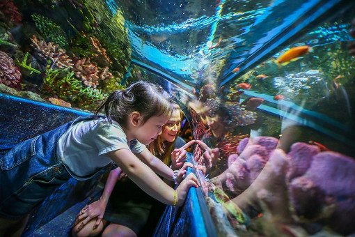Siam <b>Ocean</b> World Discount Ticket Bangkok | INDIWAY