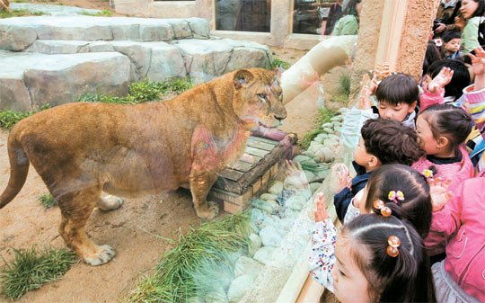 seoul land zoo