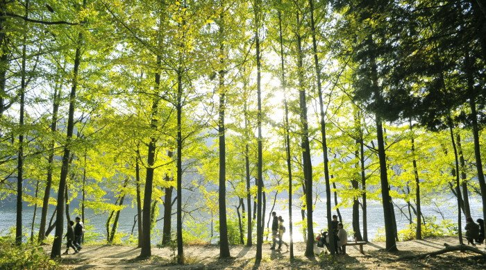 Nami Island Korea Summer View