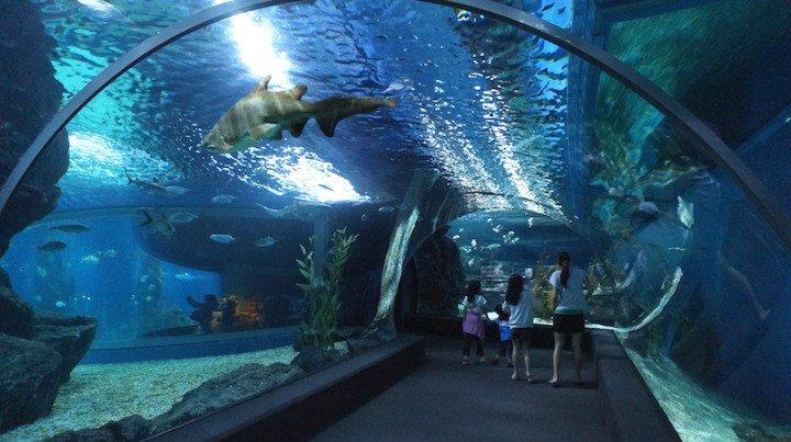 океанариум Бангкока Siam Ocean World