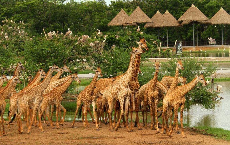 Safari World Bangkok ticket price