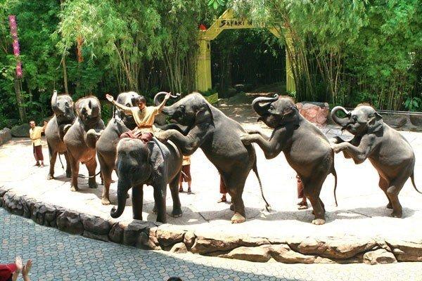 Safari World Thailand
