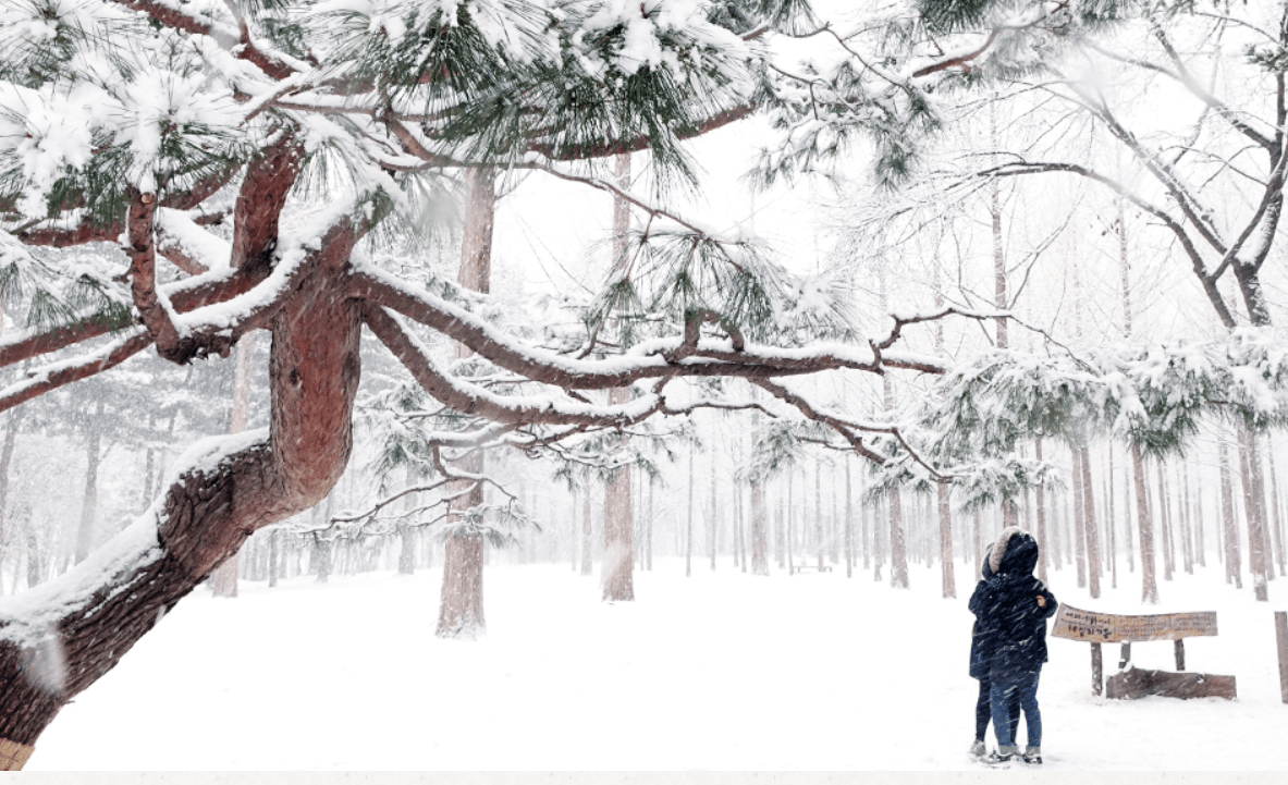Nami Island Winter View