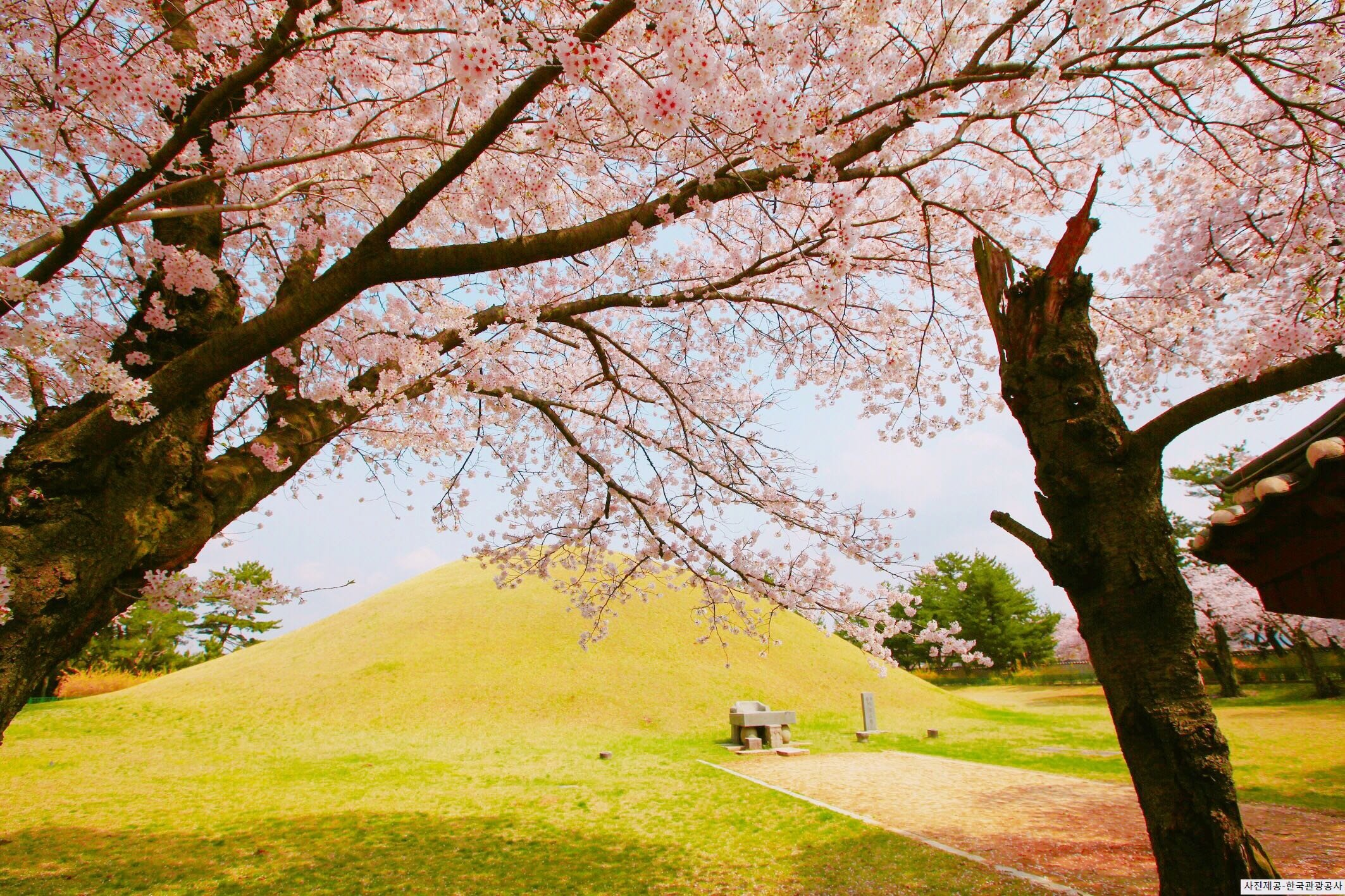 [From Busan] Gyeongju Cherry Blossom Festival One Day Tour - Royal Tomb