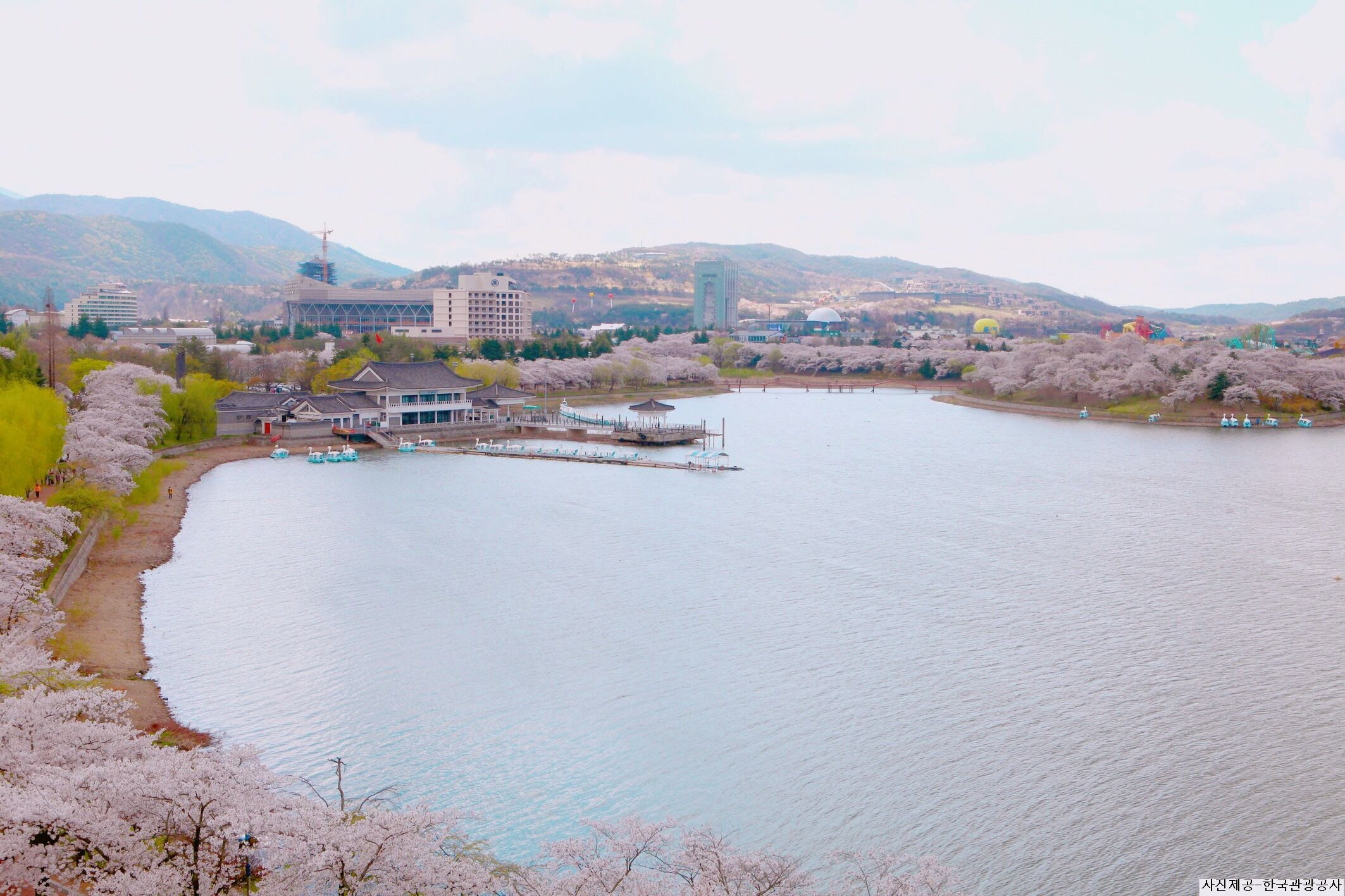 2019 Gyeongju Cherry Blossom Festival One Day Tour from Busan