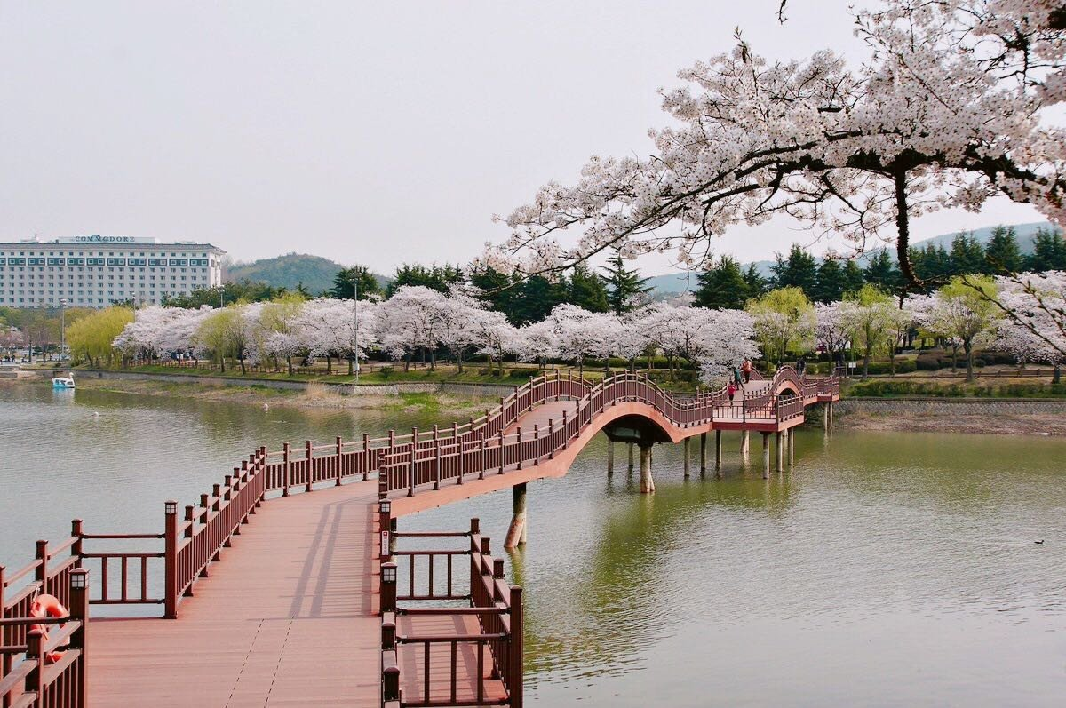 Gyeongju Cherry Blossom Festival One Day Tour from Busan