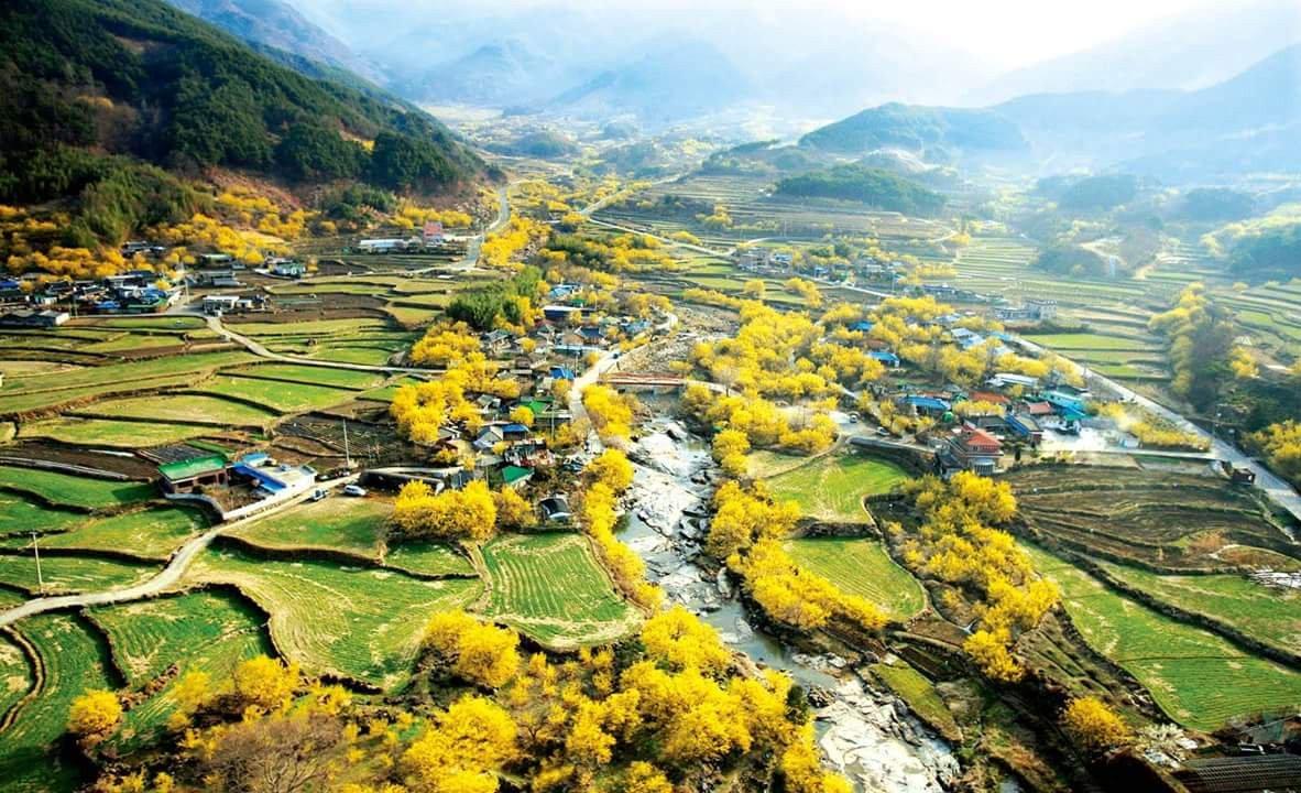 Korea Spring Flower Festivals One Day Tour - Gurye Sansuyu village