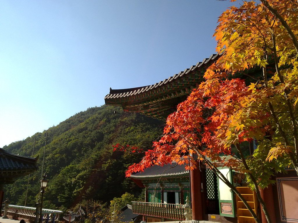 [Oct 21 - Nov 8] [From Busan] Autumn Foliage Mountain One Day Tour
