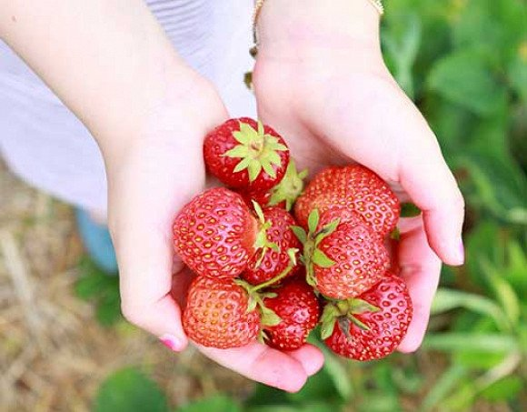Nami Island & Strawberry Farm & Garden of Morning Calm Private Day Tour